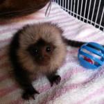 CUTE BABY GEOFFREY