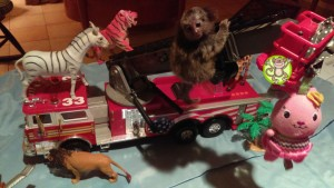 Marmoset on Firetruck