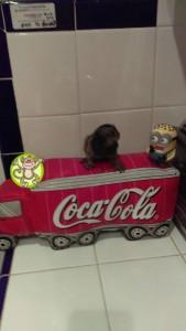 Marmoset on coca-cola cooler